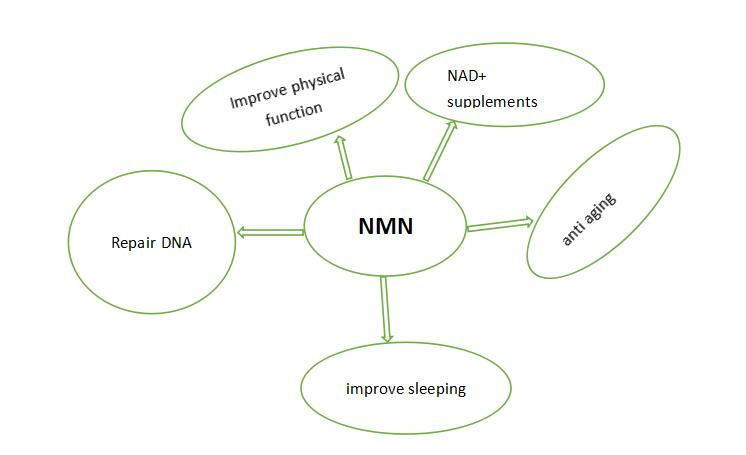 function of NMN